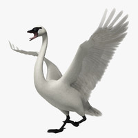 cygnus buccinator trumpeter swan obj