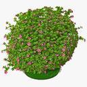 azalea 3D models