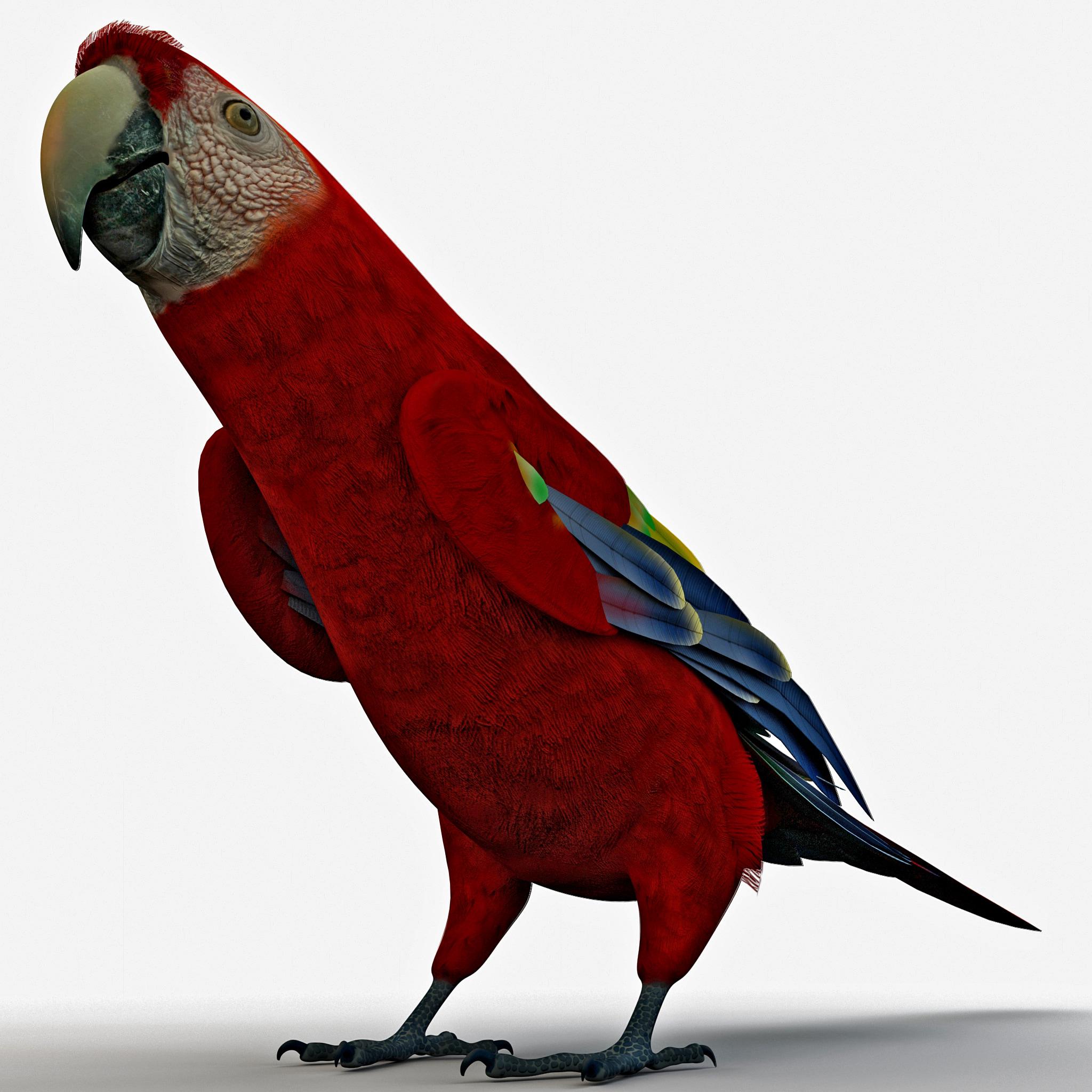 scarlet macaw pose 1 3d obj