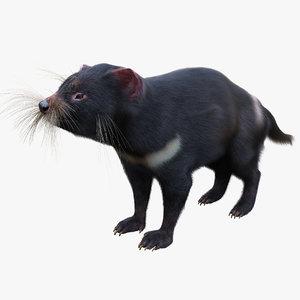 tasmanian devil fur max