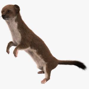 weasel pose 2 fur 3d model