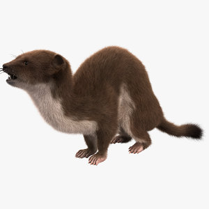 weasel pose 3 fur max