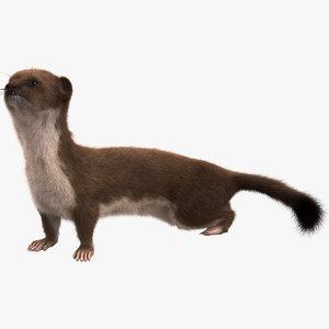 3d model weasel pose 4 fur