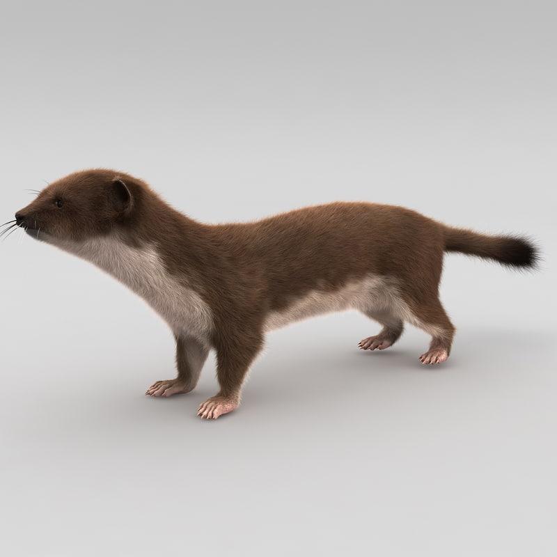 3d model weasel rigged fur