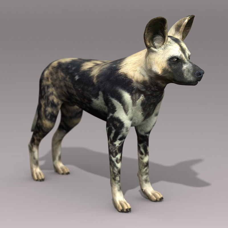 3d model realistic african wild dog