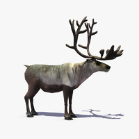 Real Time Textured Reindeer