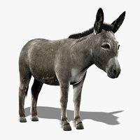 3d realistic donkey