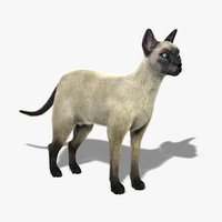 3d model siamese cat