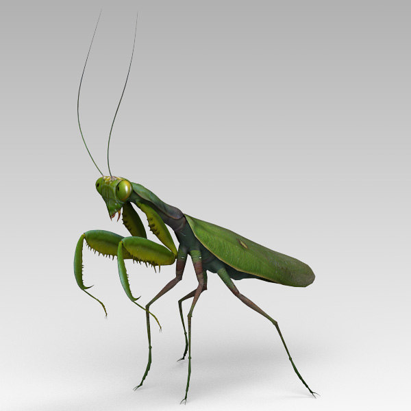 3dsmax praying mantis