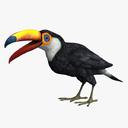 toucan 3D models