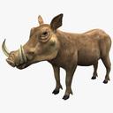 Warthog 3D models