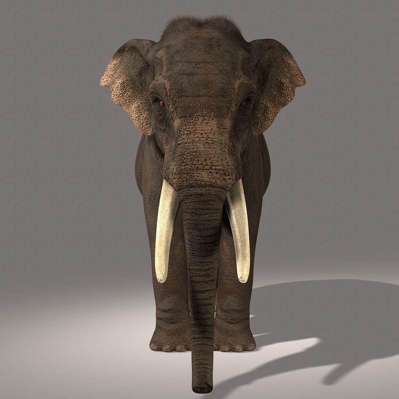 3d model photorealistic asian elephant fur