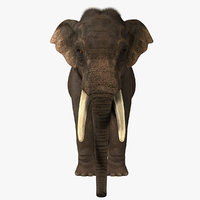 3d model photorealistic asian elephant fur