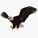 bald eagle 3D models
