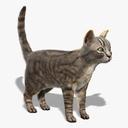 Cat (FUR)