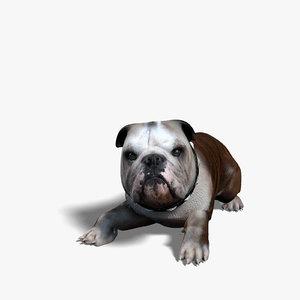 bulldog rigged obj