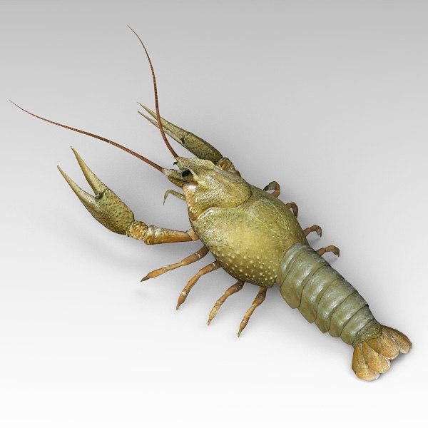 3d lobster model