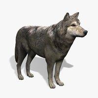 wolf modeled 3d model