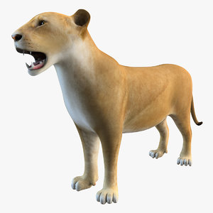 3d model lioness animal