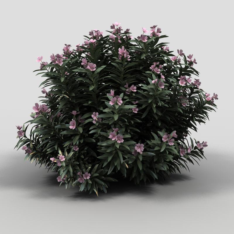 3dsmax oleander bush pink