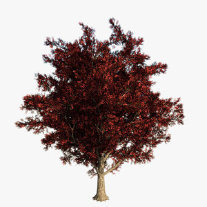 real red maple tree 3d max