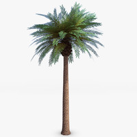 Date Palm 3D Models for Download | TurboSquid