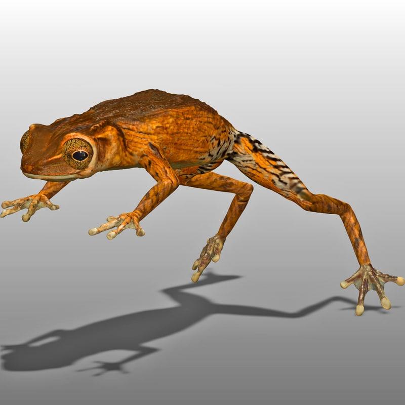 3d brown tree frog model