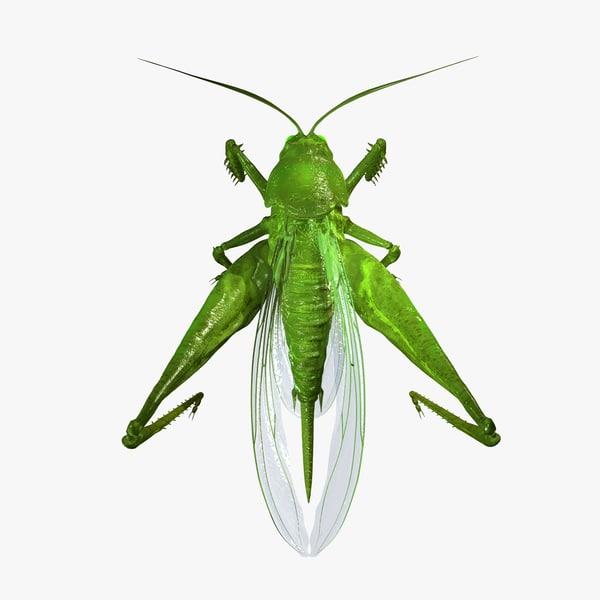 grasshopper 3d c4d
