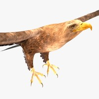 max eagle