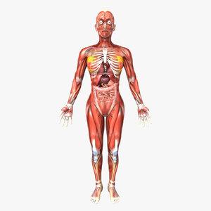 human female anatomy body 3d model