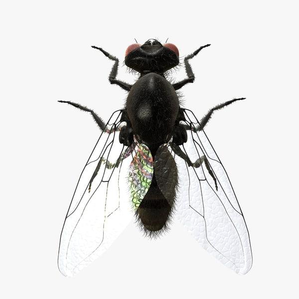 3d housefly hair model