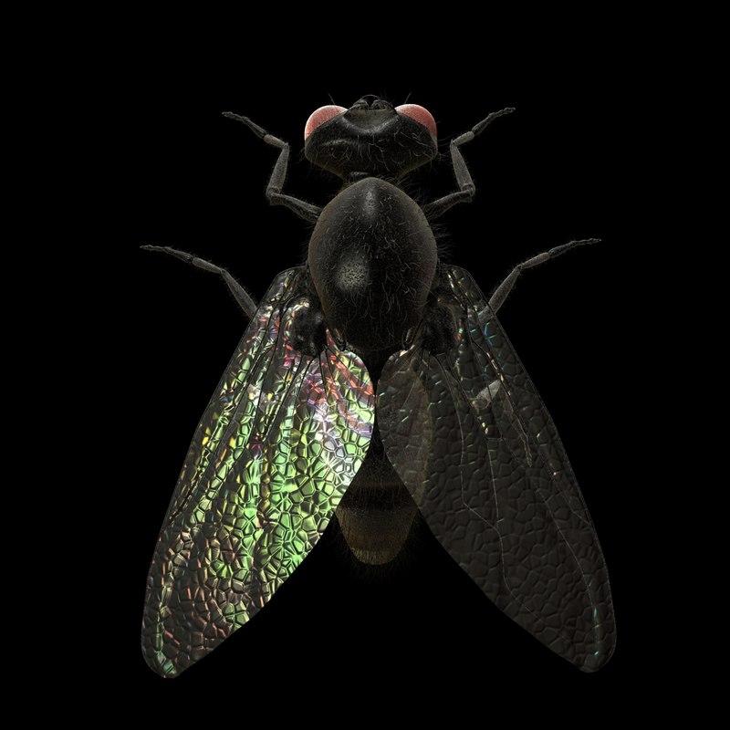 Housefly R2