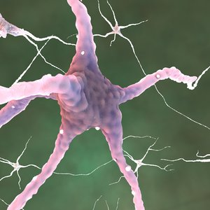 neurons glial cells c4d