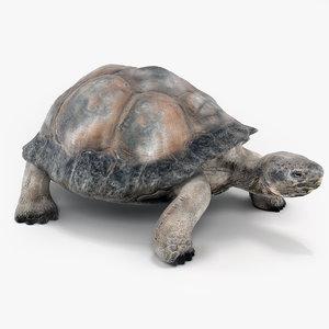 tortoise turtle 3d model
