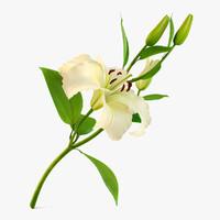 3dsmax flower lily