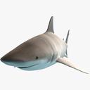 bull shark 3D models
