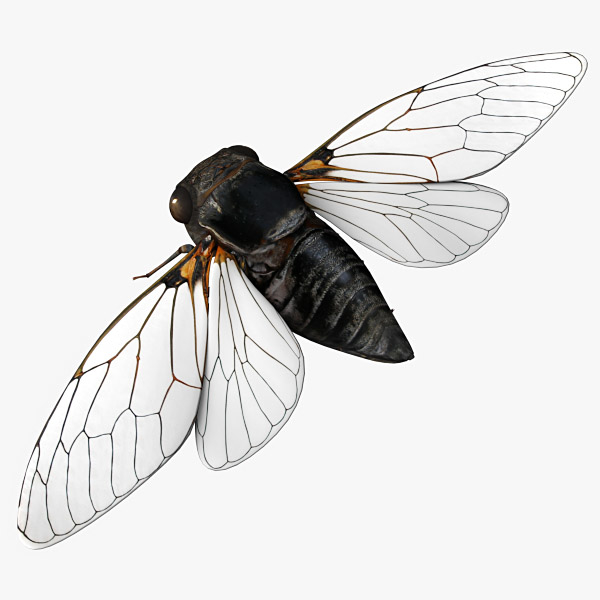 3d model cicada wing