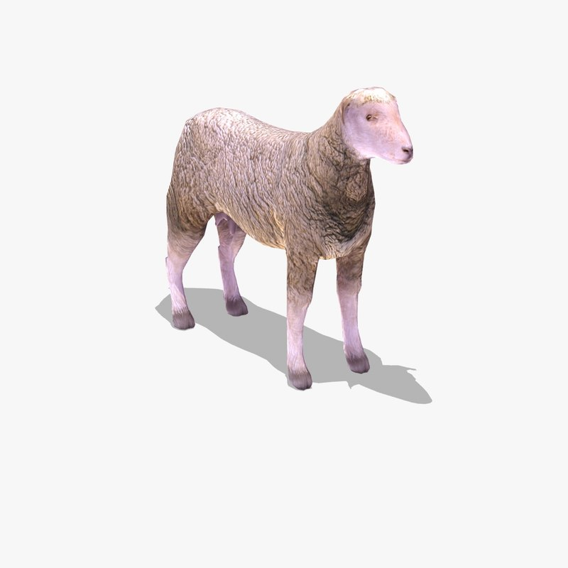 arabi sheep 3ds
