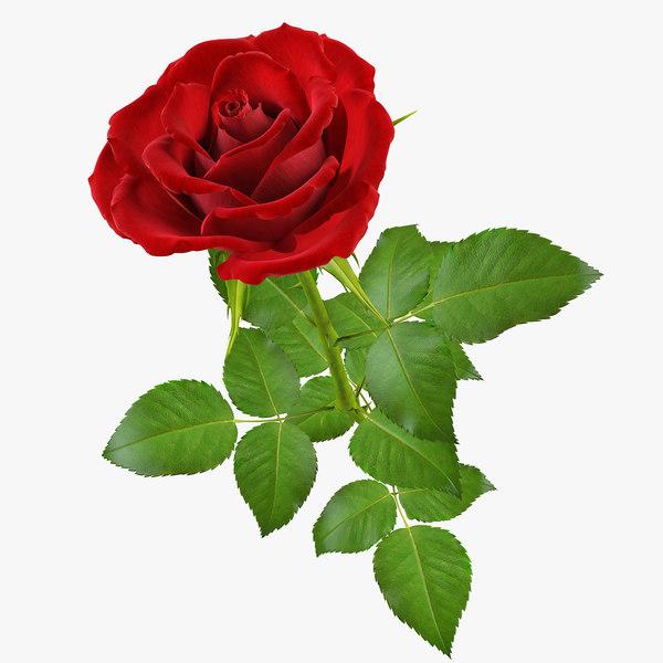 3d max rose flower