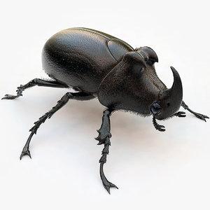 max rhinoceros beetle