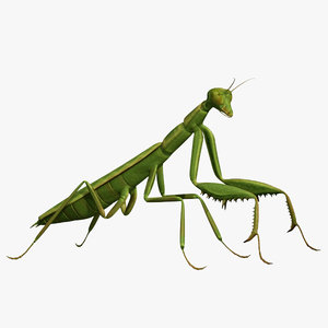 3d model realistic praying mantis