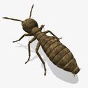 Termite 3D models