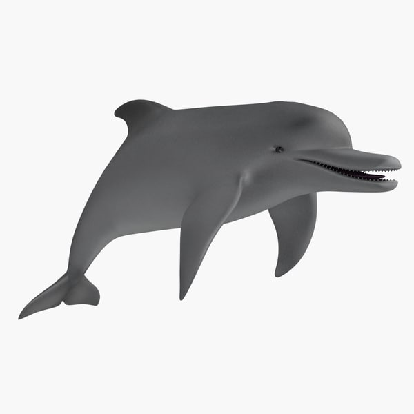 dolphin animation 3d max