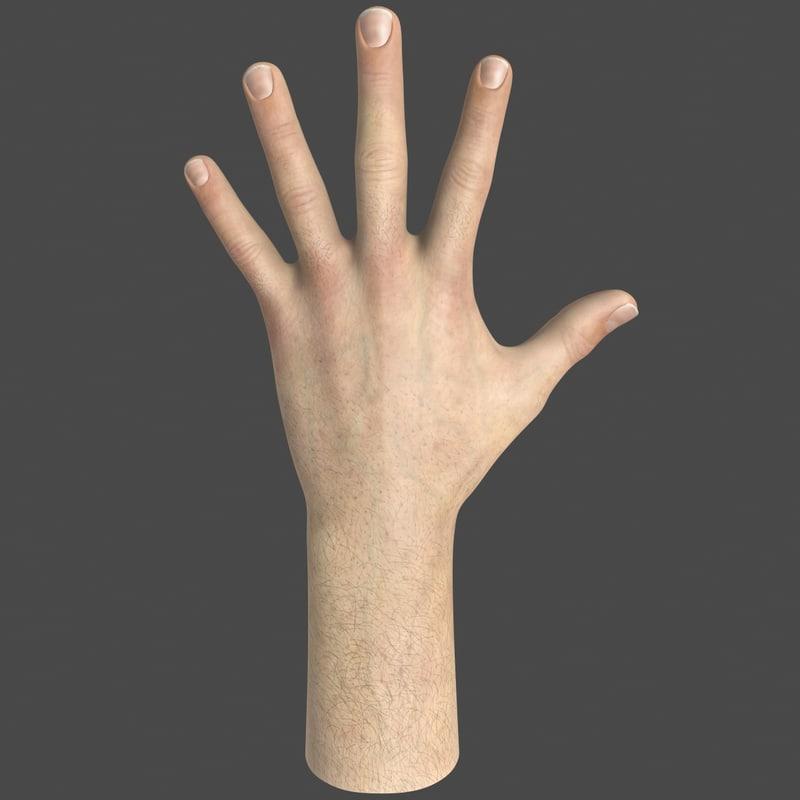 3d male hand model