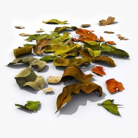 leaf fallen leaves 3d obj