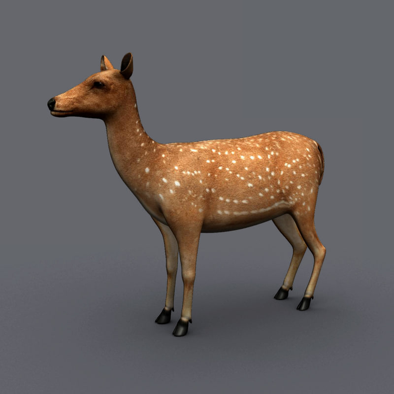 deer animation max