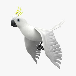 3d cockatoo animation flying model