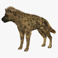 Hyena with Hair
