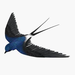 swallow bird max