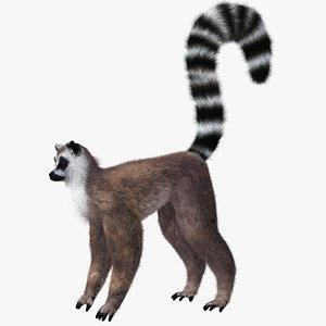 hair lemur 3d c4d